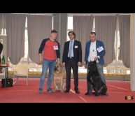 International Dog Show Belgrade 2017
