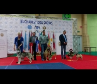 International Dog Show Bucharest 2017